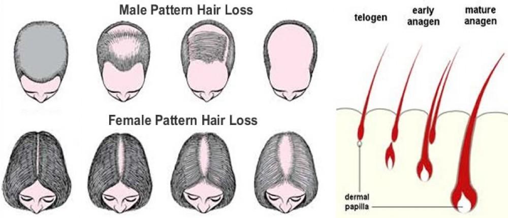 Как на голове растут волосы
